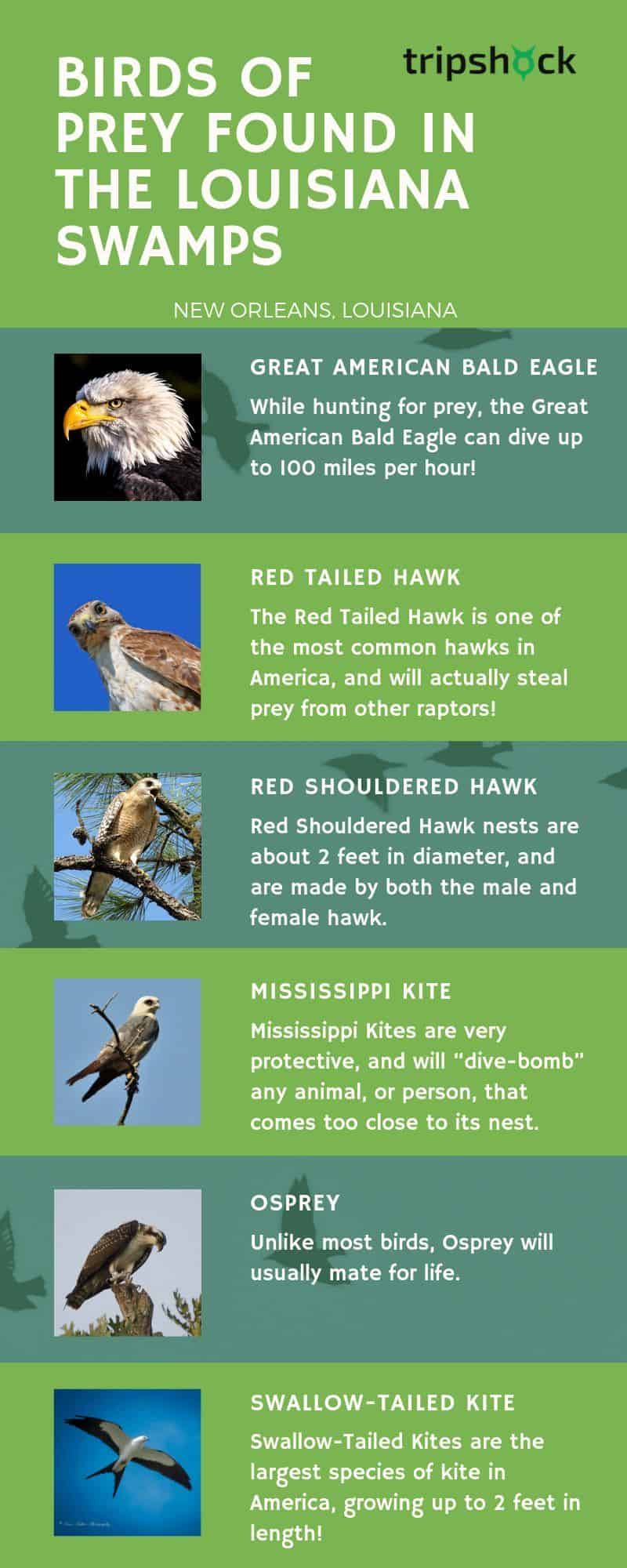birds of prey found in the louisiana swamps