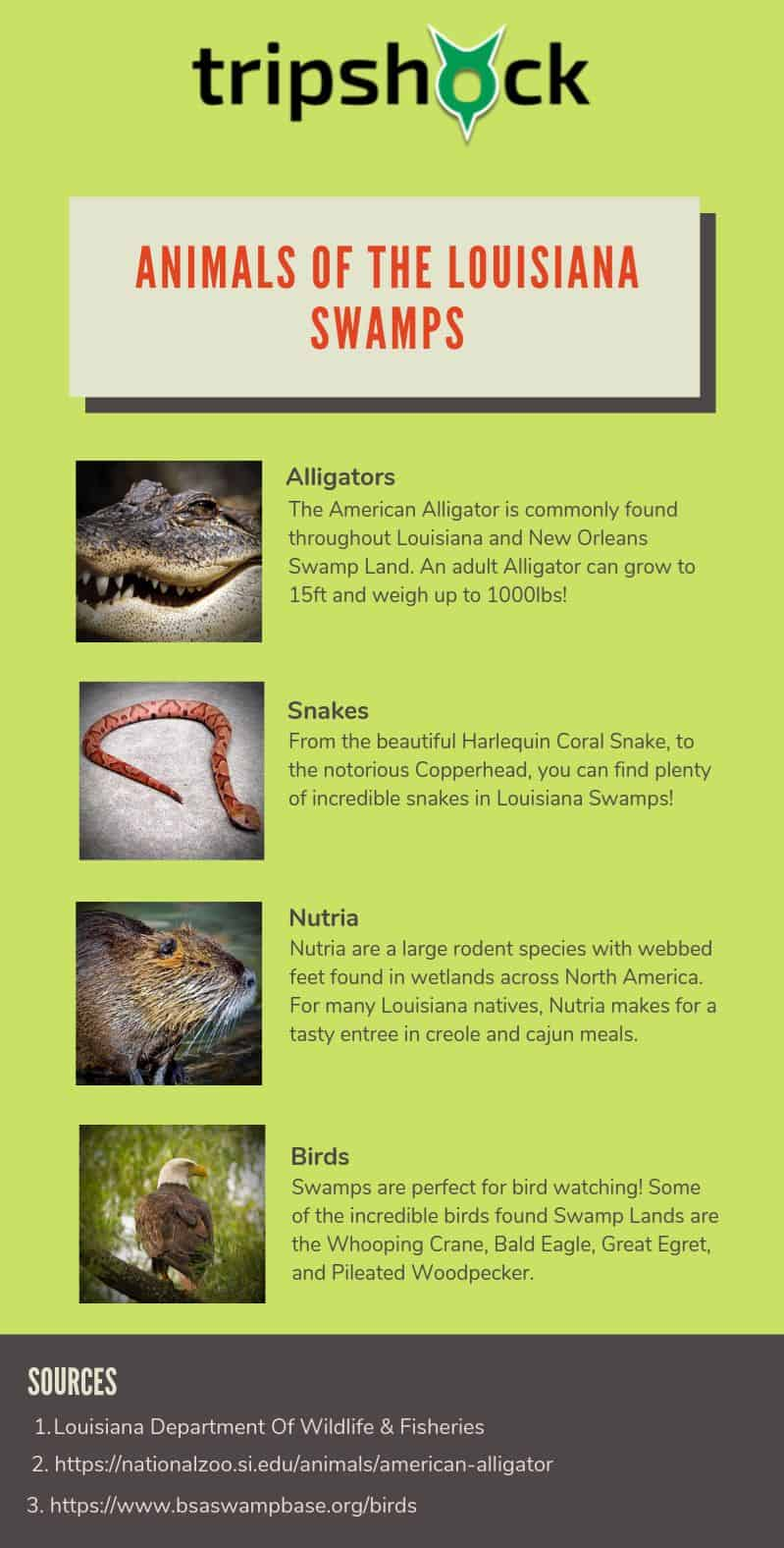 Animals of the New Orleans Swamp
