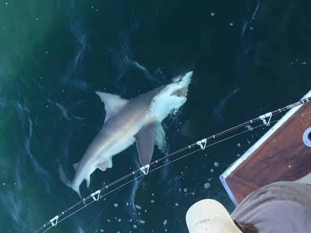 Shark Fishing Charter in Destin