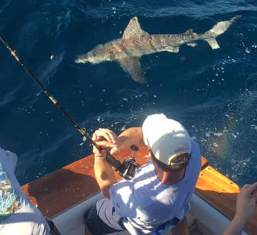 Shark Fishing Private Charter