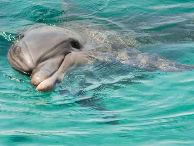 wild-dolphin-encounters