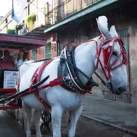 French Quarter Carriage Ride and Cemetery Tour