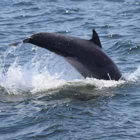 Sea Thunder Dolphin Cruise Myrtle Beach