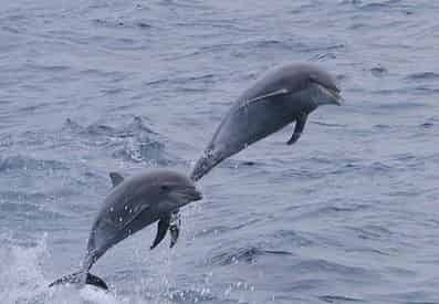 Jet Ski Dolphin Tour with Myrtle Beach Watersports