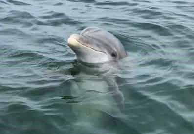 Small Group Dolphin and Eco-Tour Experience - Panama City Beach