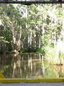 Honey Island Swamp Tour With Optional Transportation from New Orleans Hotels