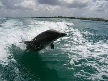 Dolphin & Snorkel Adventure With Panama City Dolphin Tours & More