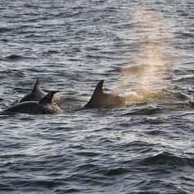 Orange Beach Dolphin and Sailing Tour