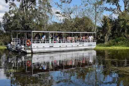 Adventures of Jean Lafitte Swamp Tour with Optional Transportation from New Orleans