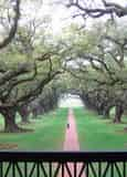 Oak Alley or Laura Plantation Tour with Transportation from New Orleans Hotels