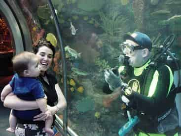 New Orleans Aquarium of The Americas Admission Tickets