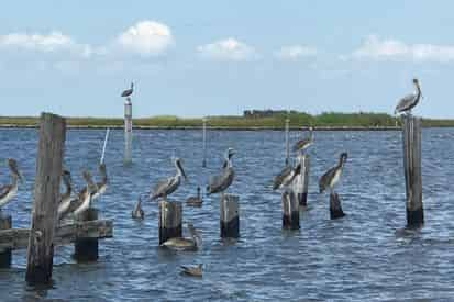 Wetlands, Wildlife, & Coastal Communities Eco-Tour with The Great Delta Tours