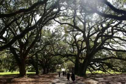 Guided Oak Alley & Whitney Plantation Combo Tour from New Orleans