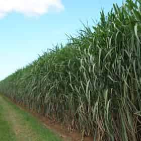 Creole Sugarlands Admission & Guided Heritage Plantation Land Tour with Optional Meal