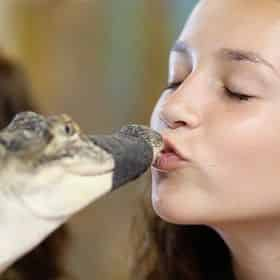 Kiss a Gator at Alligator Attraction