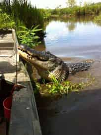 Grand Tour: Two Plantations, Lunch & Airboat Swamp Tour with Transportation from New Orleans