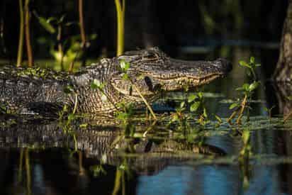 Manchac Magic Kayak Swamp Tour by Wild Louisiana Tours
