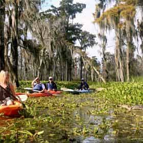 Manchac Magic Kayak Swamp Tour by Wild Louisiana Tours