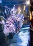 New Orleans Zoo, Aquarium, Butterfly Garden & Insectarium Combo Deal