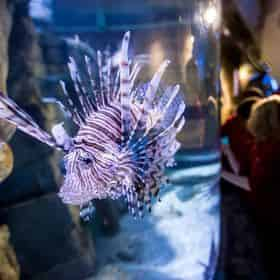 New Orleans Zoo, Aquarium, Butterfly Garden & Insectarium Combo Deal