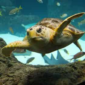 Combo Admission to ZooTampa at Lowry Park & The Florida Aquarium