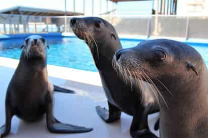 Discover Sea Lions at Gulfarium Marine Adventure Park