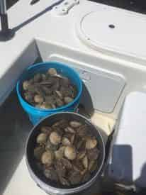 Homosassa Family Scalloping Tour with Light Tackle Adventures