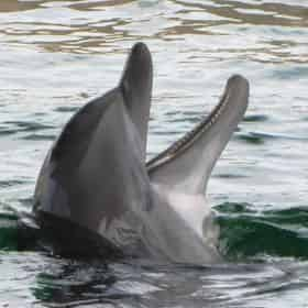 Dolphin Watch & Sightseeing Cruise