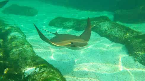 Discover Stingrays at Gulfarium Marine Adventure Park