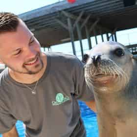 Discover Sea Lions at Gulfarium Marine Adventure Park