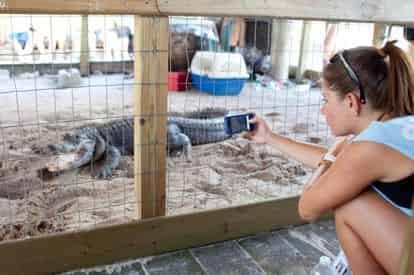 Everglades Afternoon Tour & Wildlife Show with Transportation