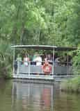 Jean Lafitte Swamp Tour with Optional Transportation