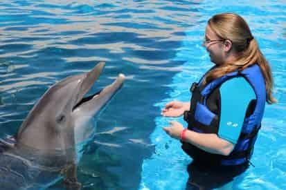 Dolphin Splash Encounter at Gulfarium Marine Adventure Park