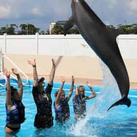 Dolphin Splash Encounter at Gulfarium Marine Adventure Park