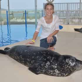 Discover Harbor Seals at Gulfarium Marine Adventure Park
