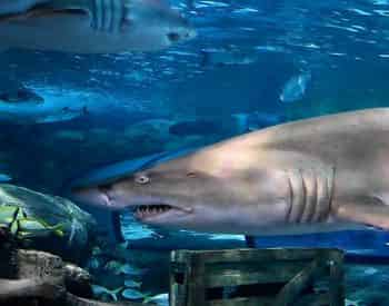 Ripley's Aquarium PLUS You Pick One COMBO