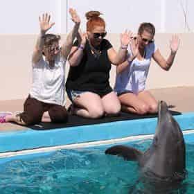 Discover Dolphins Encounter at Gulfarium Marine Adventure Park