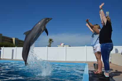 Discover Dolphins Encounter at Gulfarium Marine Adventure Park