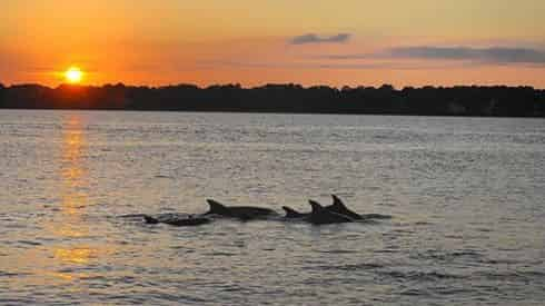 Sunset Dolphin Cruise with Blue Dolphin at The Flora-Bama
