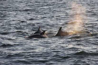 Dolphin & Nature Sunset Cruise On the Explorer Orange Beach