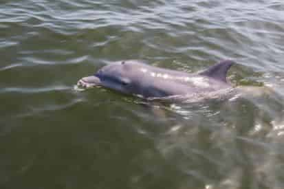 2 Hour Private Dolphin Tour with Optional Photography Session