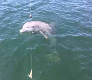 Dolphin Tour & Fishing Combo with Coastal Life Charters & Adventures