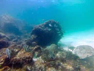 Beginner Scuba Diving Tour