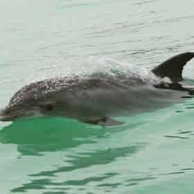 Screaming Eagle Dolphin Sunset Cruise