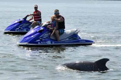 Completely Private Waverunner Dolphin Tours with Barefoot Jet Ski Tour Co.