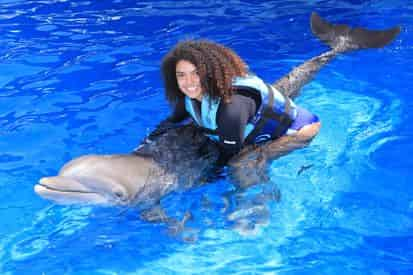 Royal Swim with Dolphins at Gulf World Marine Park