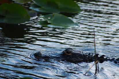 Miami City Tour and Everglades Airboat Excursion with Transportation
