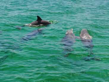 Small Group Dolphin & Snorkel Tour