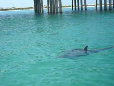 Private Small Group Crab Island, Dolphin, and Snorkel Adventure Tour
