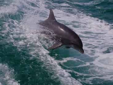 2 Hour Snorkel & Dolphin Experience Tour